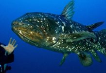 coelacanth project