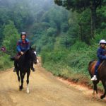 horseback safaris south africa
