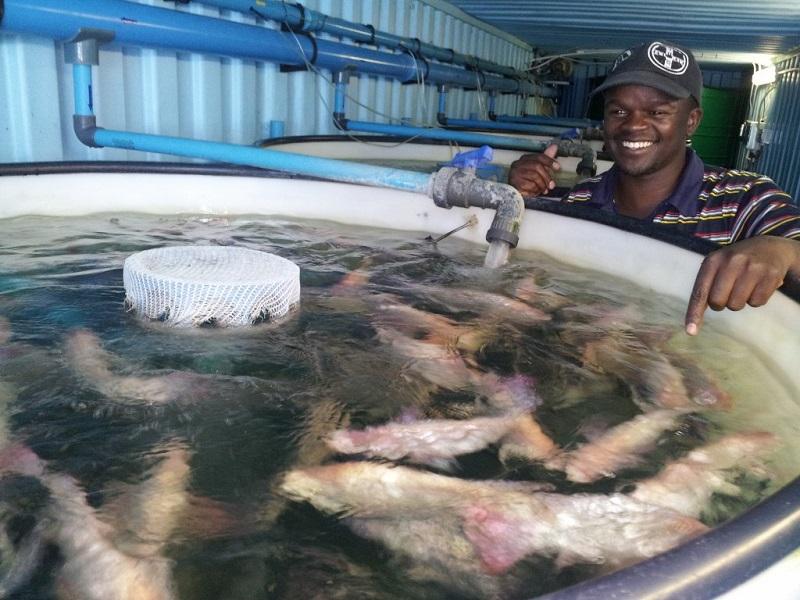 fao fish farming manual