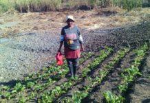 AgriHUB small scale farmers KwaZulu-Natal