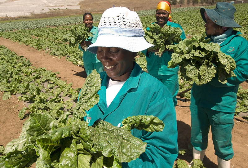 south african agriculture jobs