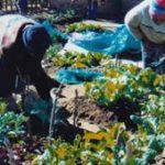 Mandela Day: food gardens to combat hunger