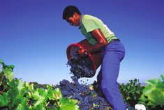 SA wine back on growth track