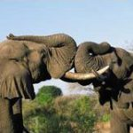 Sudafrikanische Wildtiererlebnisse