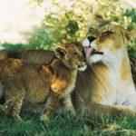 Sudafrikas Wildtierwunder