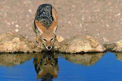 Les merveilles de la vie sauvage en Afrique du Sud