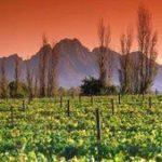 Sudafrikanische Landwirtschaft