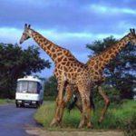 Sudafrikanische Reiseerlebnisse