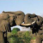 Experiencias na vida selvagem Sul Africana