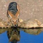 As maravilhas da vida selvagem da África do Sul