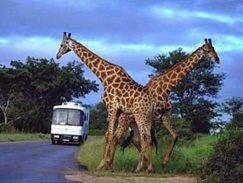 Experiencias de viagem na África do Sul