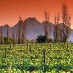 A agricultura na África do Sul