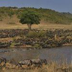 Kenya's wildlife migrates to the internet