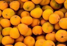 South Africa takes up citrus black spot issue at WTO
