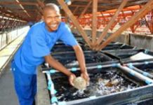 DTI incentive helps abalone farmer meet demand