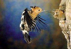 South Africa's wildlife wonders