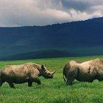 #WorldRhinoDay2015 - Fighting the good fight for the rhino