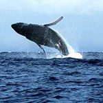 South African scientists depart on whale studying expedition