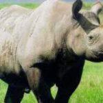 SA gets R25m to tackle rhino poaching