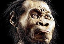 New human related species found at Maropeng