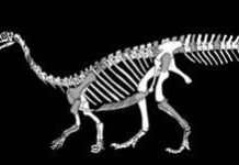 New dinosaur discovery in South Africa