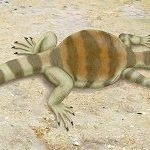 South African team uncovers answers to the origin of turtles