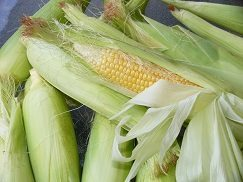 South African school science project takes on maize toxins