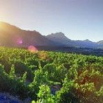 Top 'green' rating for Wines of SA