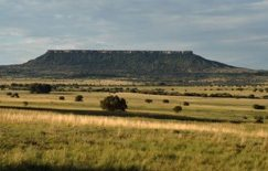 SA gets serious about its grasslands