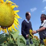 Unilever SA in sunflower partnership