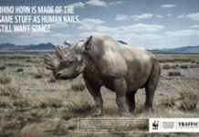 Adverts target rhino horn consumers