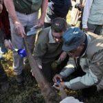 Motlanthe helps tackle rhino poachers
