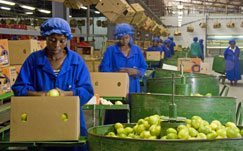 'Huge potential' in SA's agro-processing industry