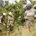 Land Bank back on track