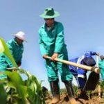 Developing Mpumalanga's farmers