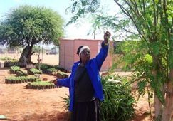 Beating hunger with the 'Miracle Tree'