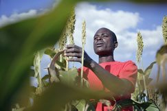 Investor, look to African agriculture'