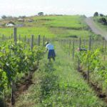 Blazing a wine trail in KwaZulu-Natal
