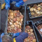 Bidvest buys UK seafood distributor