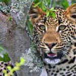South Africa is 'best of the best' place to visit