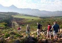 Eco-tourism in South Africa's winelands