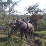Riding an African elephant