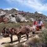 Cederberg donkey cart route to new jobs