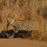 Photographing nature at the Pilansberg
