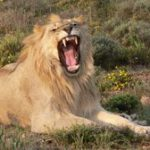 SAA will no longer transport hunting trophies