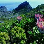 Cape floral heritage site expands