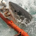 Shark encounters in South African waters