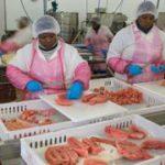 SA's employment tax incentives boost jobs