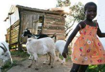Helping the SA Diaspora to give back