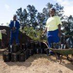 Durban's plan to offset COP 17 footprint